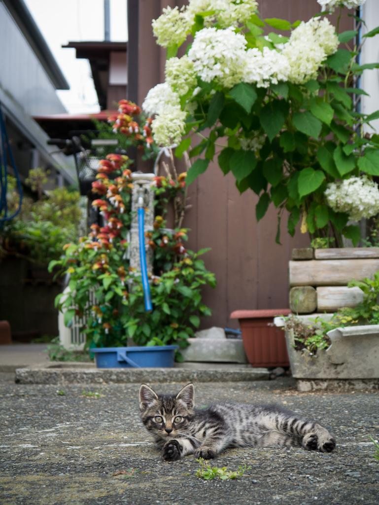 自然に見えるパンチラ総合スレPart.10 改 [無断転載禁止]©bbspink.comYouTube動画>1本 ->画像>5003枚