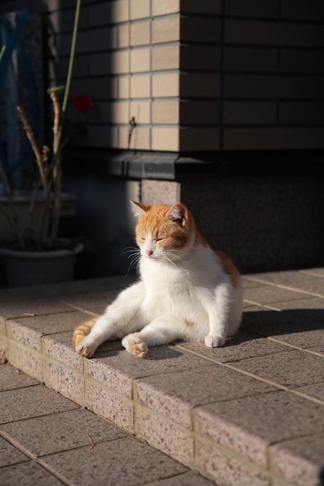 【画像】テレビ番組のパンチラ★87 [猫厳禁!] [無断転載禁止]©bbspink.com->画像>6314枚